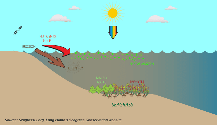 graphic of seagrasses in water
