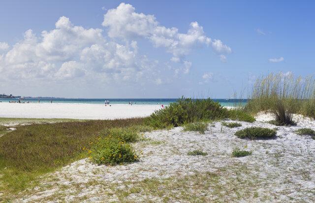 dune community