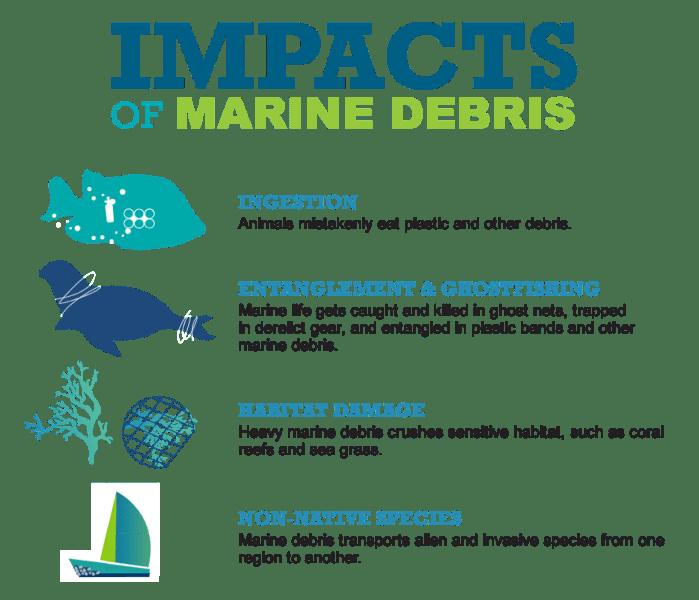 Imapct of Marine Debris on Marine Animals