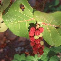 Plant Species