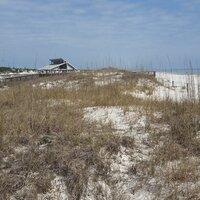The Sand Dune Community