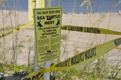 Sea Turtle Nest Notice
