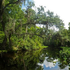St. Johns River Watershed