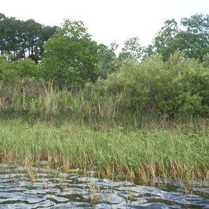 Lake Jesup Watershed