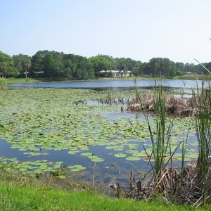 Lake Citrus