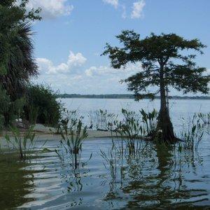 Lake Griffin